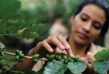 世界知名咖啡生产国家TOP10